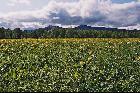 Миселинская поляна. Начало июня.