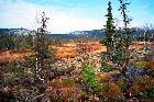 Вид с болот в сторону Мал. Иремеля