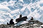 На леднике Звёздочка. Привал у тура на «тропе».