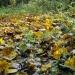 Осеннийразвал