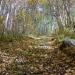 ЛеснойдорогойнагоруКусимова