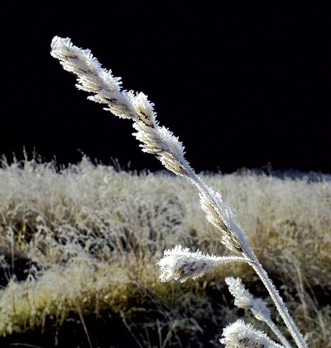Шуба не по сезону, или замерзла утром