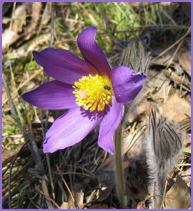 Цветок Какой-то