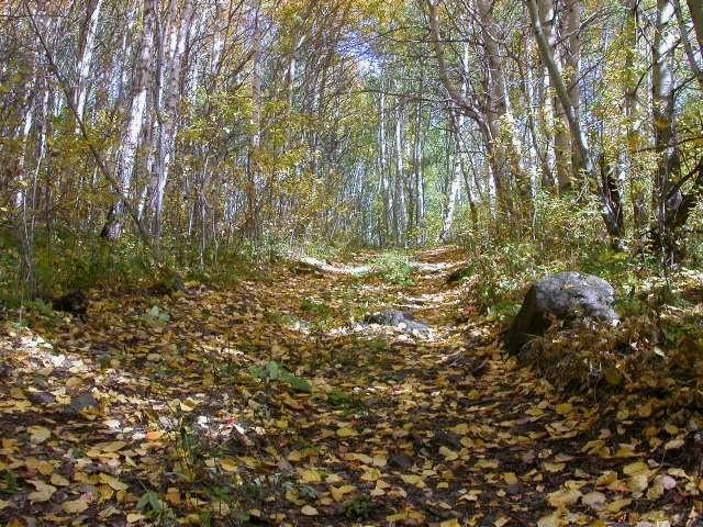 Лесной дорогой на гору Кусимова