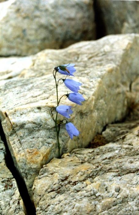 """""""Каменный цветок"""""""