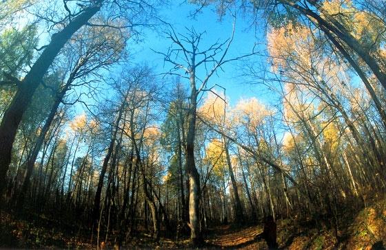 лес Масима-2