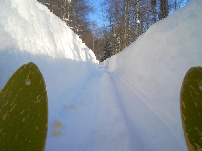 лыжня (фото А. Якушева)