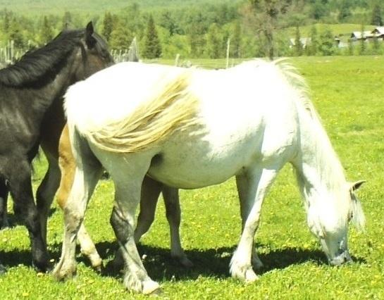 белый конь, но без принца