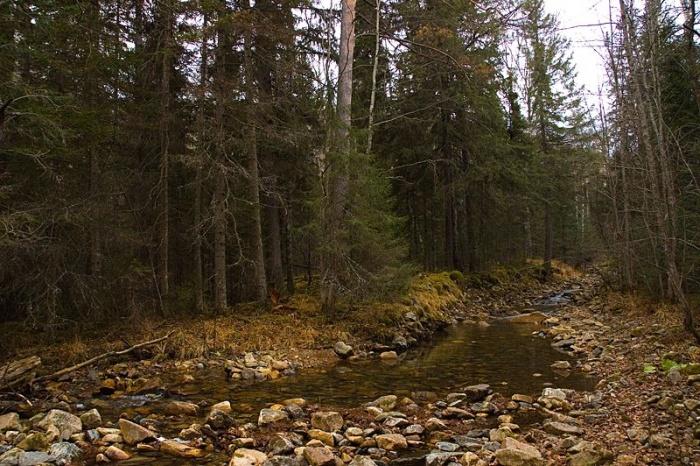 Ручей в дремучем лесу