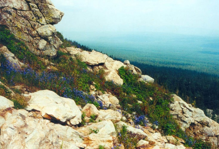 Скалы и цветы