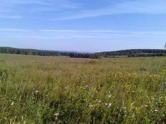 Поле рядом с хутором Салават