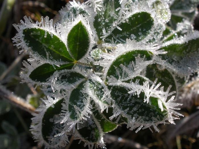 Первые заморозки на М.Ямантау