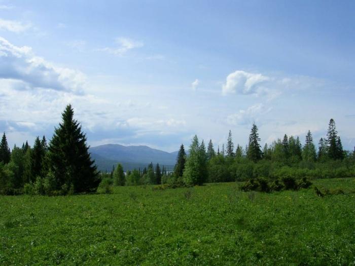 Поляна вдоль Экологической тропы на Зюраткуль