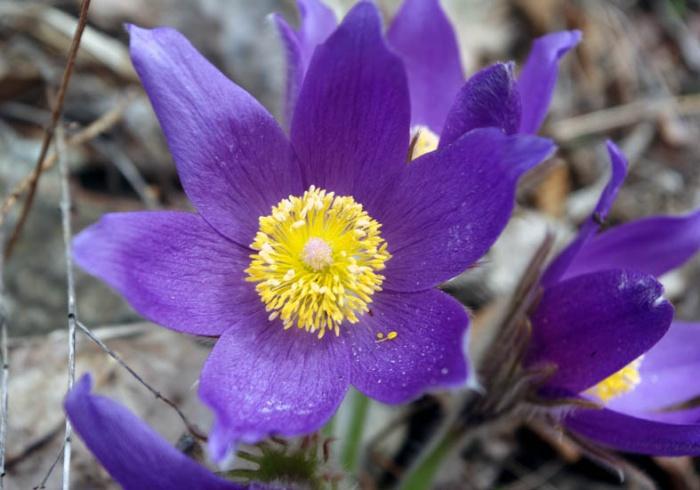 Цветок на южном урале