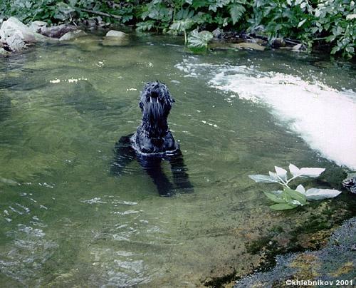 Водяной... пес :-)