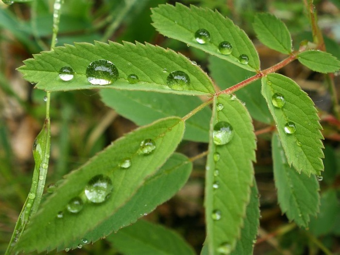 После дождя. Брильянты))