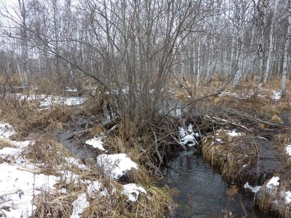 Так начинается река Урал