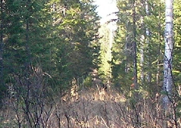 Медвежонок в лесу