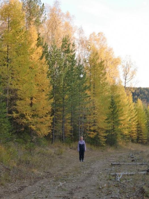 Золотая осень . 29.09.2012
