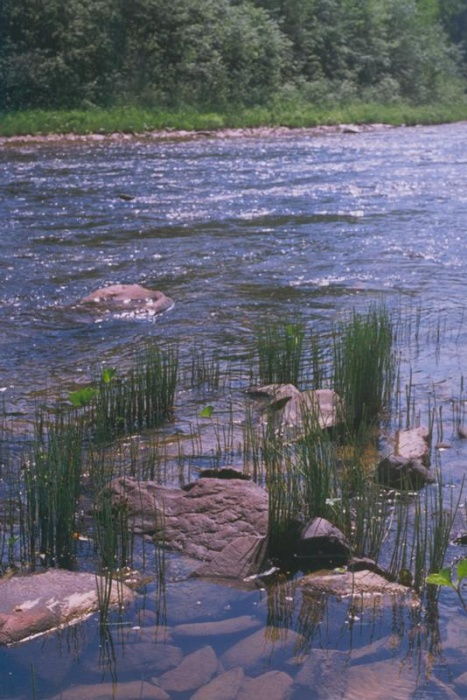 Этюд на той же реке