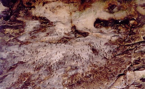 пещеры на Аркаиме