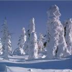 Власть зимы