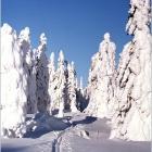 Лыжня счастливых