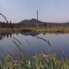 урочище Журболото июнь 2001 г