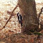 Лесные жители