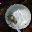 тарелка и рыбки