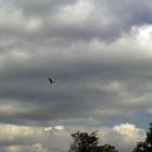 Аист в небе