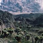 Вид на Кибо с тропы  Барранко- Каранга- Барафу.