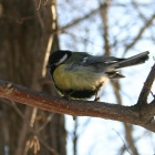 Суровая птица