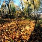лес Масима-1