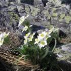 Цветы на курумнике