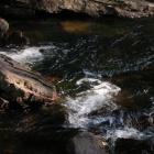 время быстрой реки