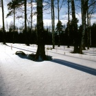 Ещё один предпоследний зимний пейзаж