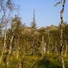 Верховое болото на хр Кумардак