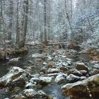 В затерянном лесу
