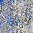 мм.... Зима :)