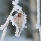 В оковах зимы