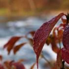 Агидель осенью