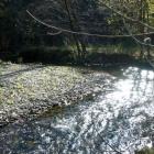 Река Ишора