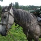 Верный друг - Конь Призыв.