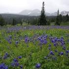 Альпийские луга  урочища  Айрык