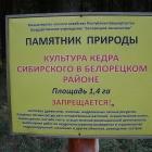 Кедровая роща у Белорецка