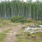 Вырубки в начале дороги к истоку реки Урал