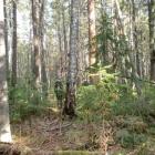 Лес в долине между хребтами Малый Таганай и Уральский