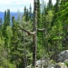 леший горы малиновой