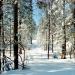 Mavlit:Зима.
